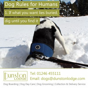 Dog rules for humans 1