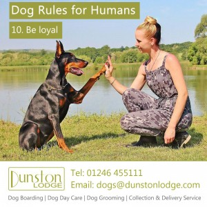 Dog rules for humans 10
