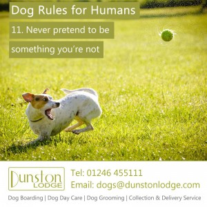 Dog rules for humans 11