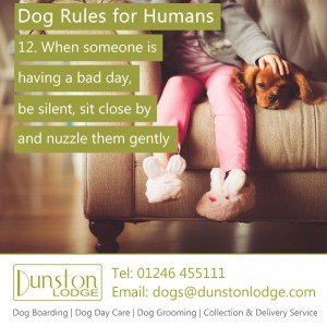 Dog rules for humans 12