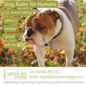 Dog rules for humans 13
