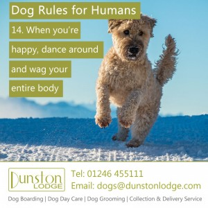 Dog rules for humans 14