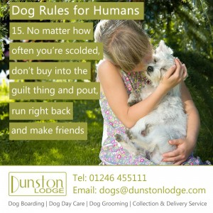 Dog rules for humans 15