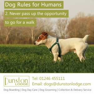 Dog rules for humans 2