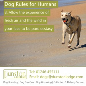 Dog rules for humans 3