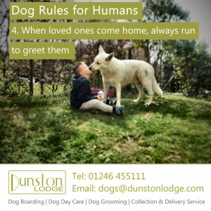 Dog rules for humans 4