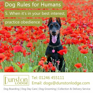 Dog rules for humans 5