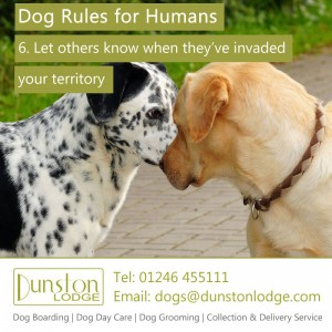Dog rules for humans 6