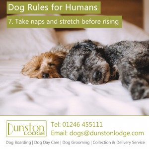 Dog rules for humans 7