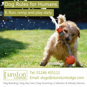 Dog rules for humans 8