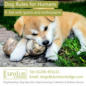 Dog rules for humans 9
