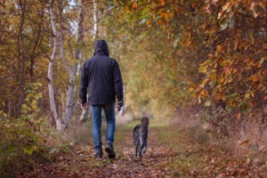 dog walks Dunston Lodge boarding kennels Chesterfield