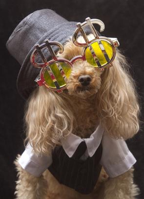 Dog costing 230,000 dollars dog kennels Sheffield