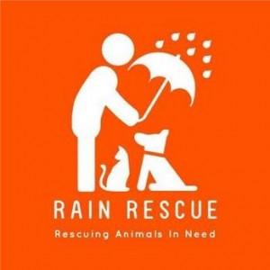 Rain Rescue - Rescuing Animals in Need