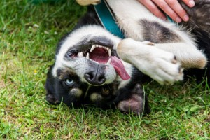 10 Amazing Dog Facts You Might Not Know