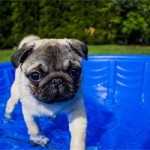 Set up a shallow paddling pool for your dog