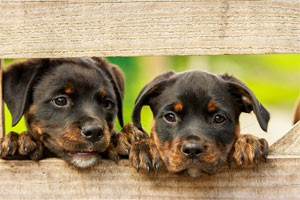top dog names kennels Chesterfield