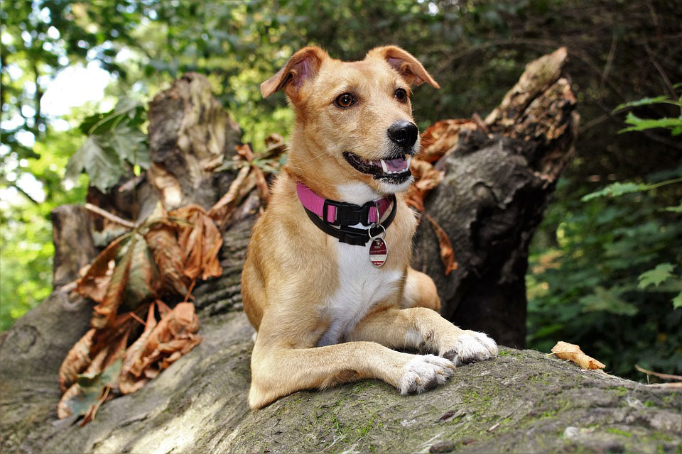 The Most Common Dangers for Dogs in the Autumn