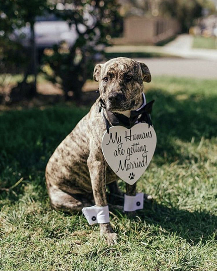 This little guy's humans are getting married