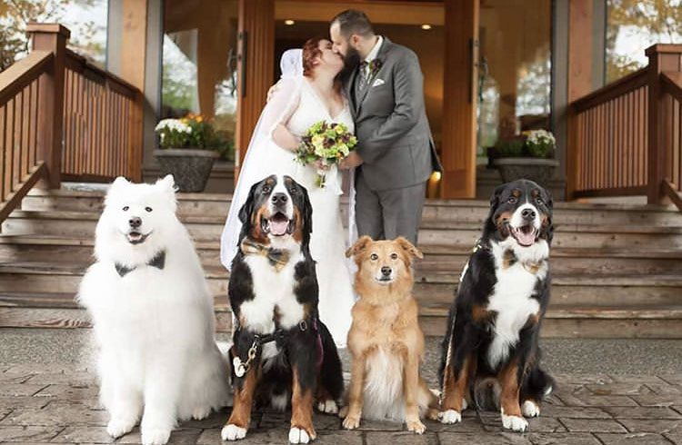 These puppies helped their Aussie folks get married