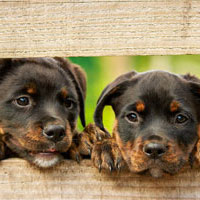 Popular Name Ideas for Your New Dog