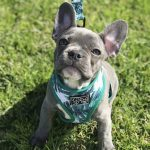 15 Adorable Instagram Christmas Puppies of 2018 on Their First Walk