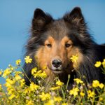 Springtime Garden Dangers For Your Dog