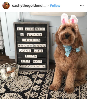 Dog Kennels Chesterfield - Dogs of Instagram 1