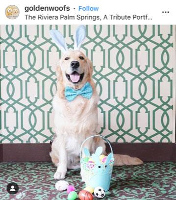 Dog Kennels Chesterfield - Dogs of Instagram 11