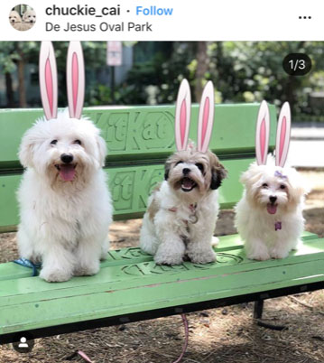 Dog Kennels Chesterfield - Dogs of Instagram 12