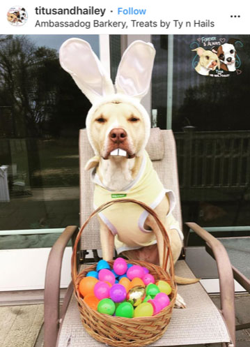 Dog Kennels Chesterfield - Dogs of Instagram 14