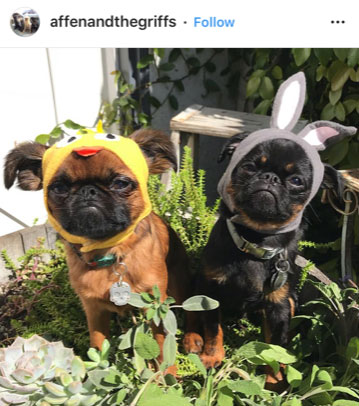 Dog Kennels Chesterfield - Dogs of Instagram 16