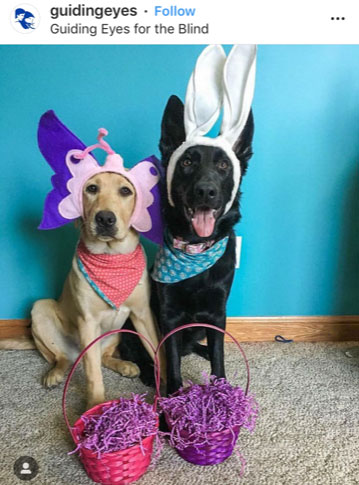 Dog Kennels Chesterfield - Dogs of Instagram 18