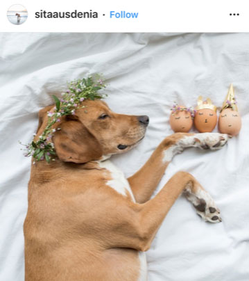 Dog Kennels Chesterfield - Dogs of Instagram 19