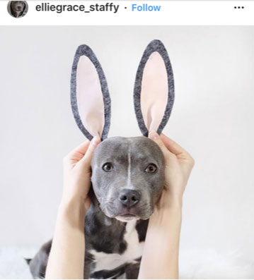 Dog Kennels Chesterfield - Dogs of Instagram 20