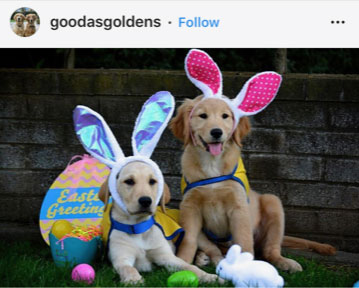 Dog Kennels Chesterfield - Dogs of Instagram 3