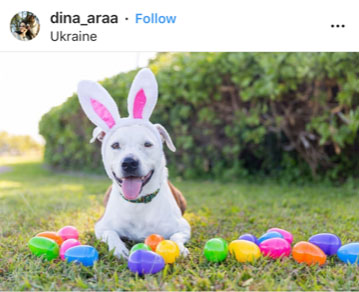 Dog Kennels Chesterfield - Dogs of Instagram 21