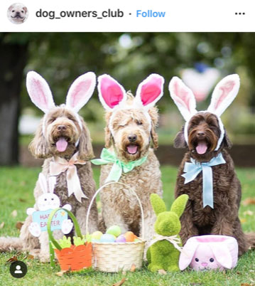 Dog Kennels Chesterfield - Dogs of Instagram 25