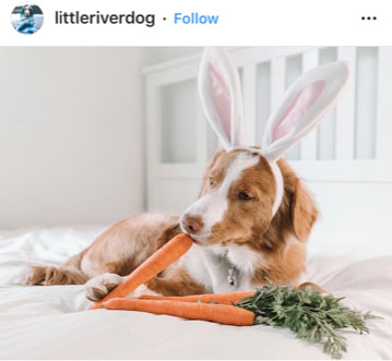 Dog Kennels Chesterfield - Dogs of Instagram 26