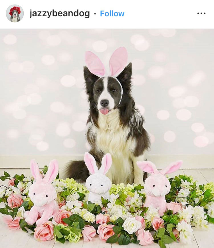 Dog Kennels Chesterfield - Dogs of Instagram 28