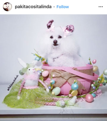 Dog Kennels Chesterfield - Dogs of Instagram 7