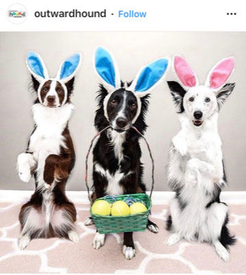 Dog Kennels Chesterfield - Dogs of Instagram 9