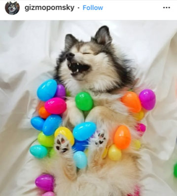Dog Kennels Chesterfield - Dogs of Instagram 10