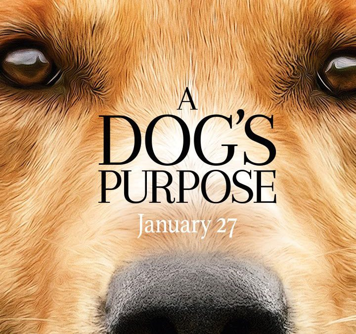 100 Dog Movies For You To Enjoy