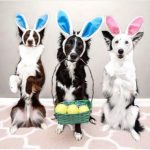 Dogs of Instagram Sporting Their Easter Outfits