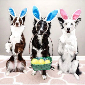 #easterdog – Dogs of Instagram Sporting Their Easter Outfits