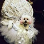 Glam And Glitz At The New York Pet Fashion Show