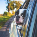 Our Top Tips For Keeping Your Dog Safe In The Warm Weather