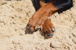 dog paws heat summer
