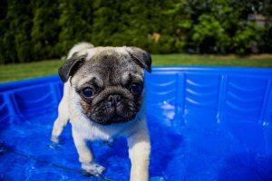 dog summer paddling pool